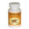 Cordyceps kínai hernyógomba kapszula 60 db