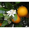 Farfalla - Grapefruit, kbA, 10 ml 10