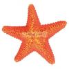 TRIXIE akvárium dísz tengeri csillag 9 cm