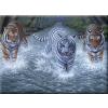 Három tigris