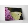 KaticaMatrica.hu Krémszínű pillangó