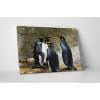 Pingvin találkozó
