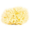 Najel Természetes szivacs 11-12 cm 1 db