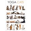 Jógázó macskák poszter