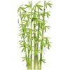 Zöld bambusz