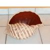 Kerámia-Virágtartó-Öblös kagyló kaspó/bordó