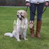 Trixie Kiképzõhám kutyák részére L-XL 37cm