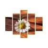 Egy szál virág vászonkép