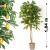 Műnövény - Citromfa 184 cm