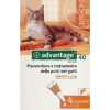 Bayer Advantage 40 Cat/Rabbit 4kgIg