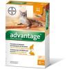 Bayer Advantage 40 Cat/Rabbit 4kgIg - 4 db pipetta
