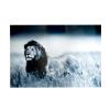 Bighome.hu Kép LION 140x95 cm