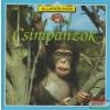 Csimpánzok - Állatkölykök