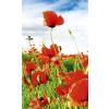 Dimex RED POPPIES fotótapéta, poszter, vlies alapanyag, 150x250 cm