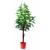 Evergreen Hawaii páfrány cserepes műnövény, 180 cm