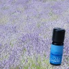 Farfalla - Lavendel fein, kbA, 10 ml 10