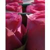 Fehér nagy henger rózsa box rózsaszín rózsákkal