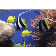 """FELLOWES Egéralátét, újrahasznosított, FELLOWES """"Earth Series™"""", tengeri halak asztali számítógép kellék"""