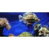 Halak, akvárium matrica
