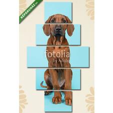 Képáruház.hu Premium Kollekció: Cute rhodesian ridgeback puppy sitting facing the camera on a bl(135x70 cm, S01 Többrészes Vászonkép) grafika, keretezett kép