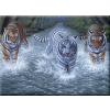 Kifestő készlet akrilfestékkel, ecsettel, gyerekeknek 11 éves kortól - 30x40 cm - Három tigris