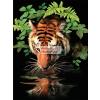 Kifestő készlet akrilfestékkel, ecsettel, gyerekeknek 8 éves kortól - 20x25 cm - Szomjas tigris
