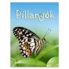 Kis könyvtár: pillangók ismeretterjesztő könyv