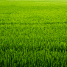 Műanyag gyeprács, zöld, 50x50 cm építőanyag