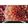 Sony KD-55XF9005B