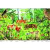 Stiefel Az erdő életközössége + ajándék 10 db munkalap
