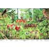 Stiefel Az erdő életközössége oktatótabló poszter