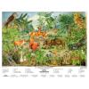 Stiefel Eurocart Kft. Az erdő életközössége fémléces, fóliázott
