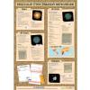 Stiefel Nemi betegségek 2./3. (vírusok/bakteriális fertőzések) - tanulói munkalap