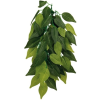 Trixie Teráriumi Dekor Nővény,Ficus 20*50cm