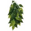 Trixie Terráriumi műnövény Ficus 50cm trx76240