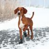 Trixie; Walker Kutyacipő Walker Active M 2db/Csomag
