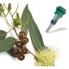 Wellis Aromaterápiás illatpatron Jakuzzihoz - Eucalyptus