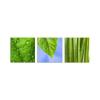 Zöld természet vászonkép